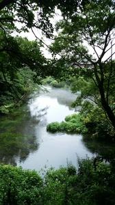 DSC柿田川公園10.jpg