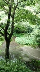 DSC柿田川公園20.jpg