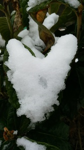 DSC雪ハート3.jpg